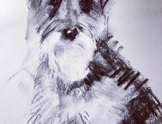dog blog, dog portrait
