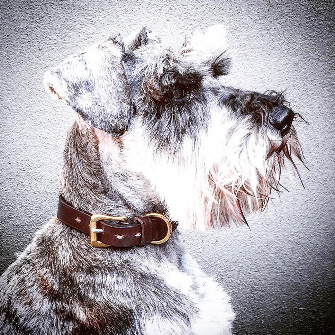 dog collar www.talesofteddy.com