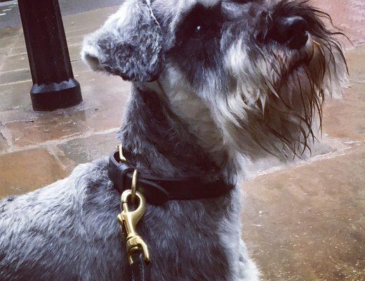 dog owners, dog training, dog collar, dog-friendly