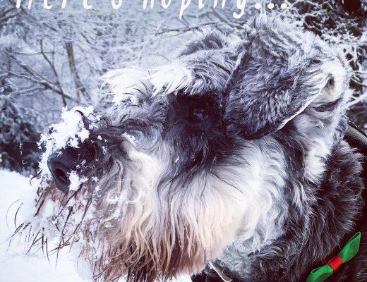 dog coat, dog collar, snow, snow day, dog coat