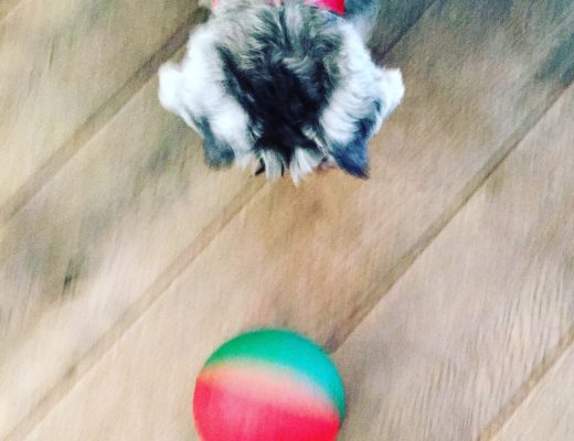 dog-feeding-toy