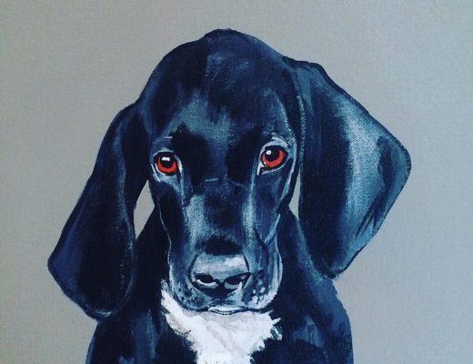 dog-portraite